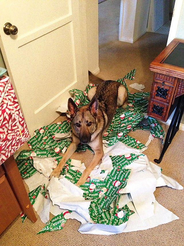 XX-animals-destroying-Christmas-5__605_e
