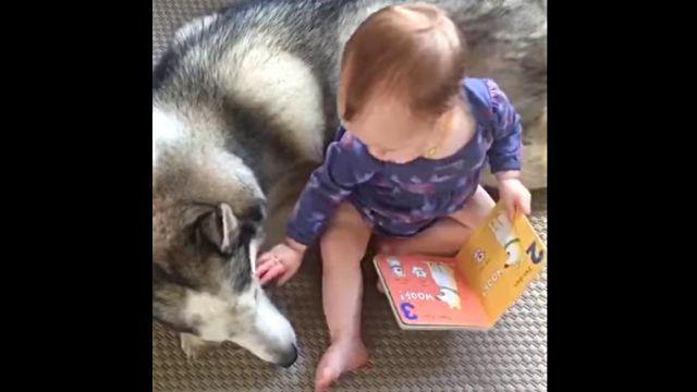 babydog3