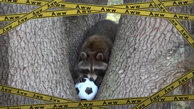 raccoon-f [www-frame