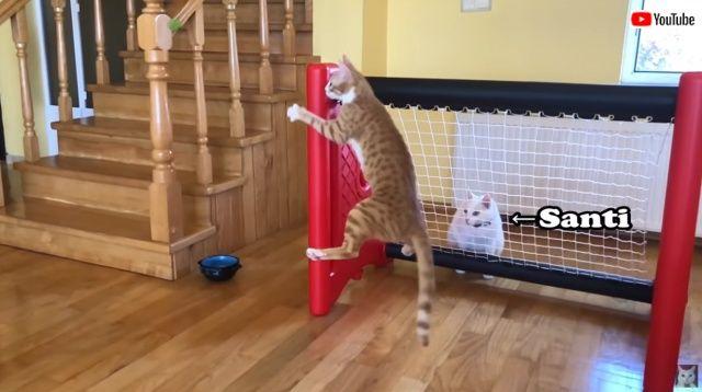 goalkeepercat2_batch