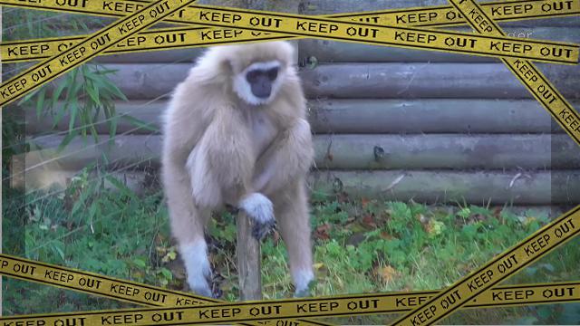 monkey-2 [www-frame
