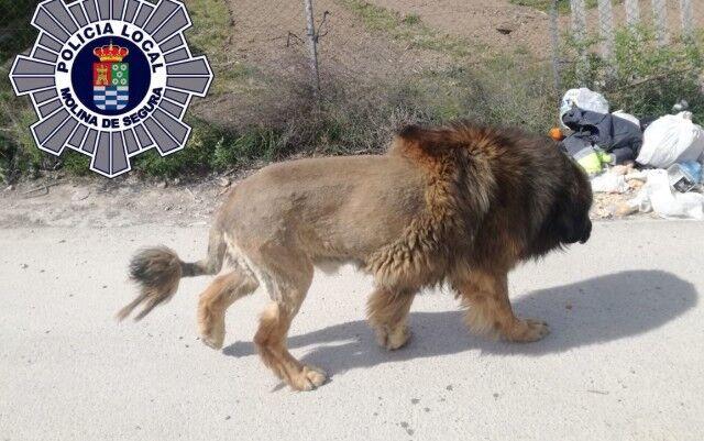 liondog0_e
