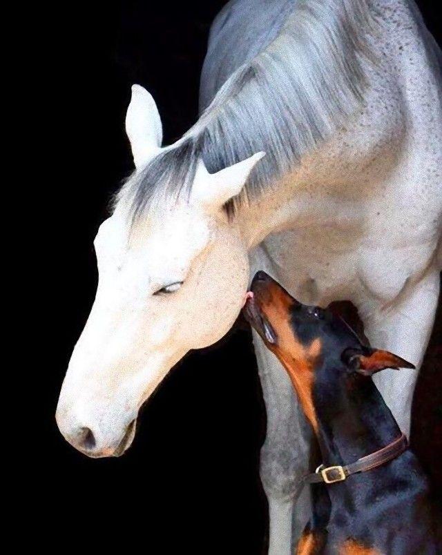 犬と馬10_e