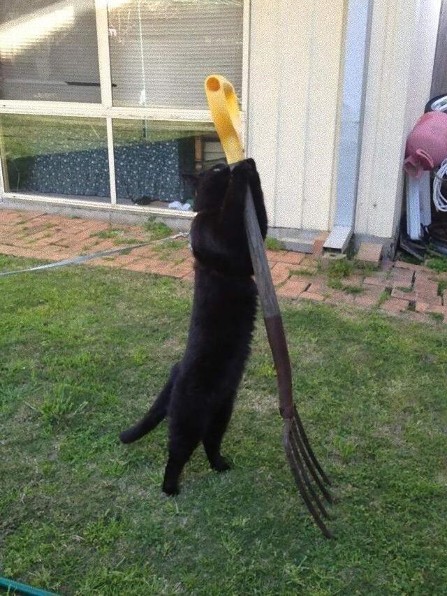 cat (4)_e
