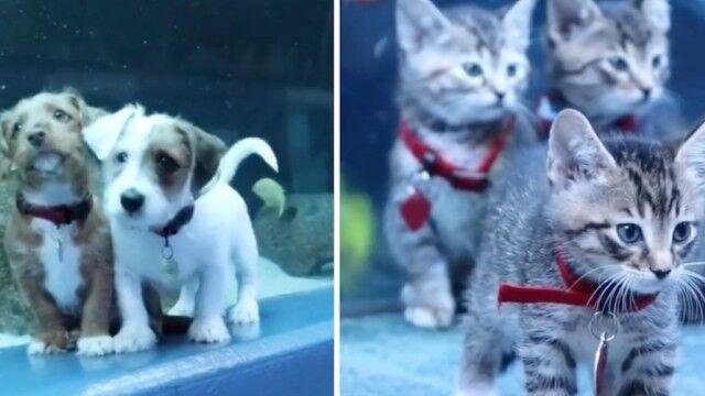 保護子猫と保護子犬、休園中の水族館を貸し切りで探索