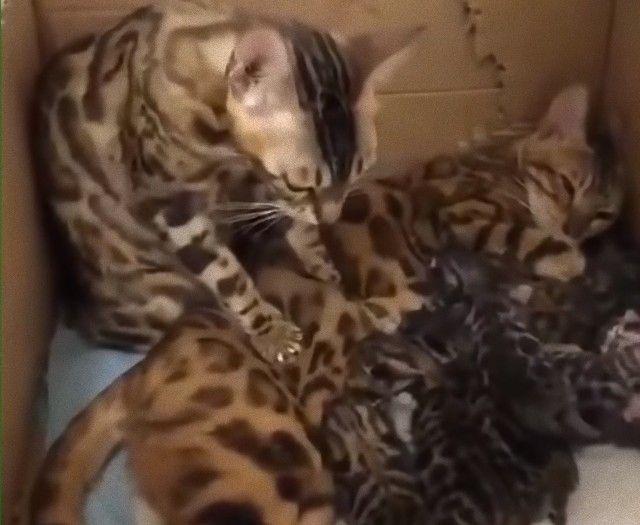 momcats3_e