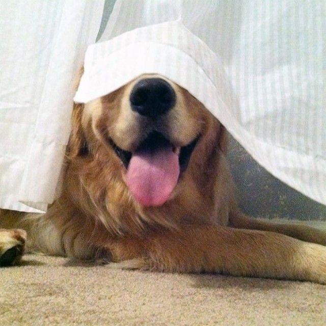 hide-and-seek20_e