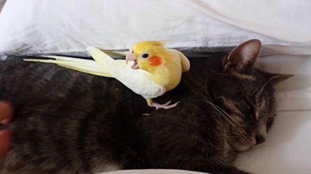 birdprotectingcat3