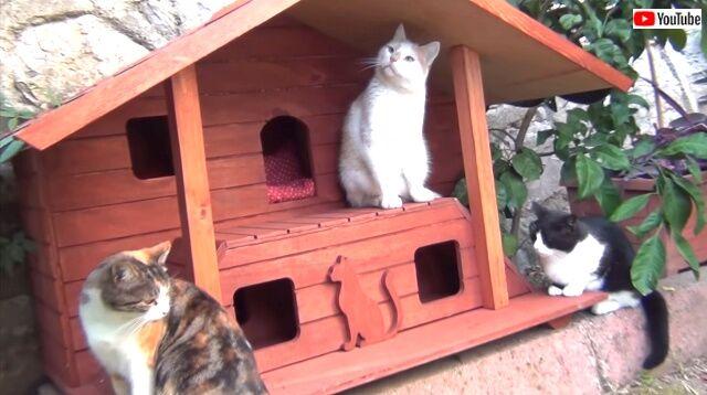 catshouse6_640