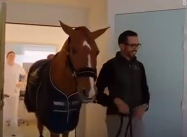 horsetherapy8_e