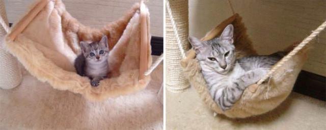 cat-4 [www.imagesplitter.net]