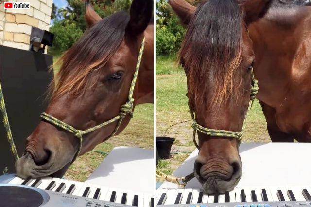 horseplayingpiano1_640