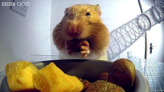 hamsterscheeks3