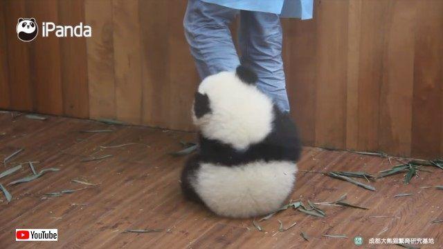 pandacubs2_e