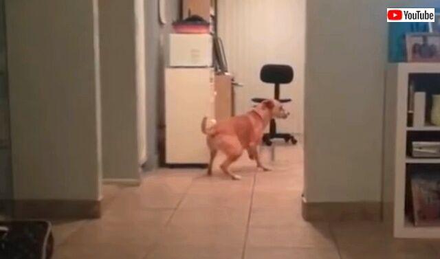 dogsawsomething1_640