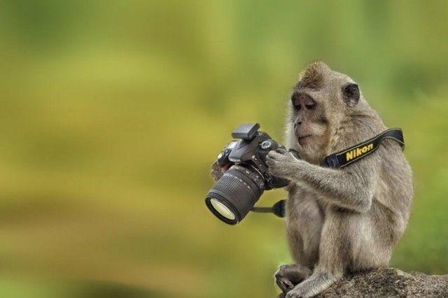 photographers8_e