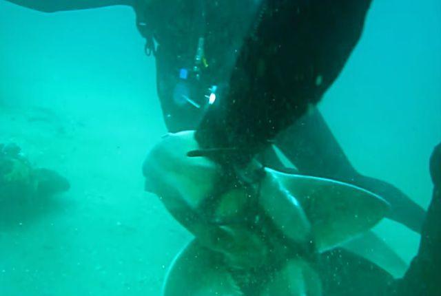 sharkaskingforhelp4