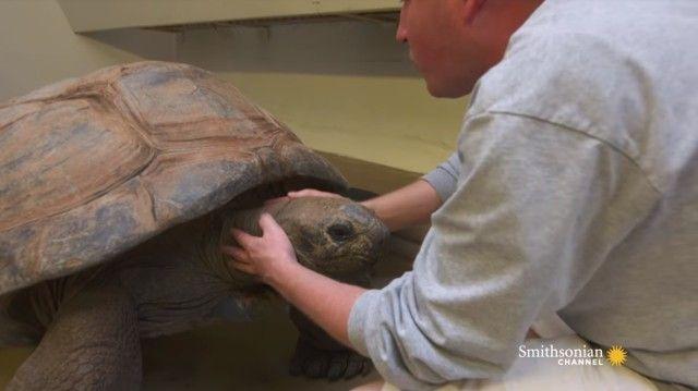 tortoises4_e