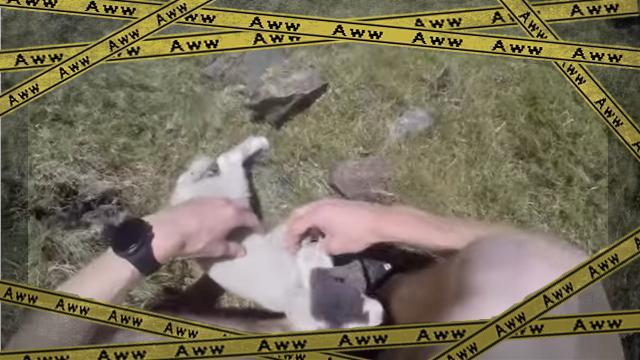 lamb [www-frame
