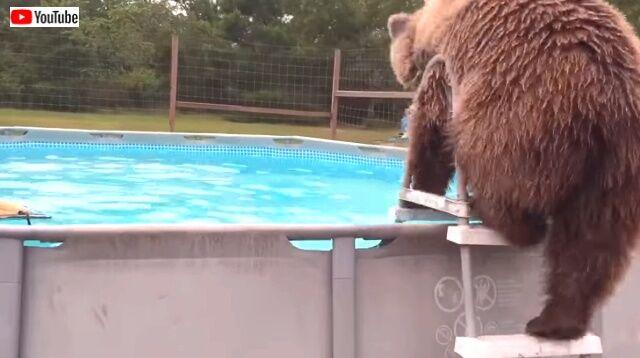 beargoes4swim1_640