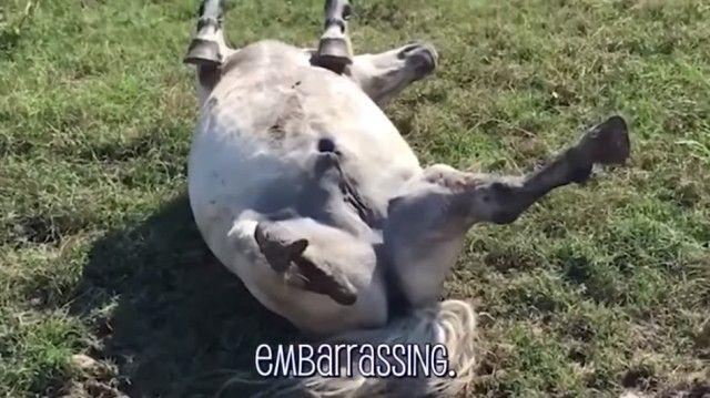 funnyhorses9_e