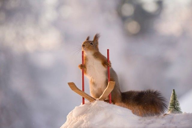 wintersportssquirrel4_e
