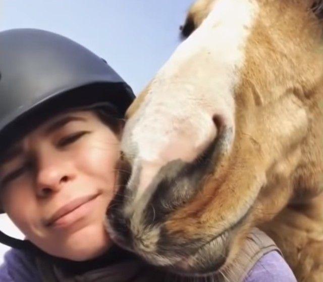 funnyhorses7_e
