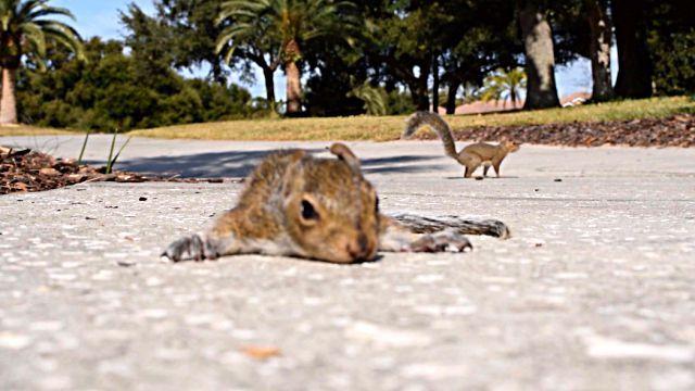squirrelbaby2