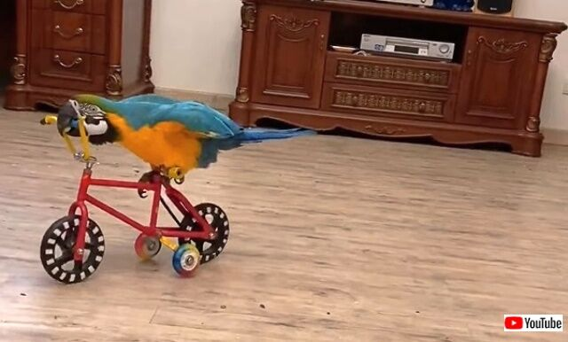 birdie4_640