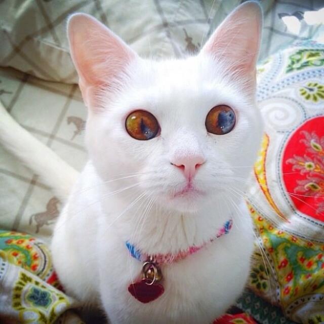 eyes-3 [www.imagesplitter.net]