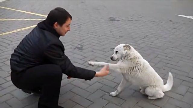 straydog4