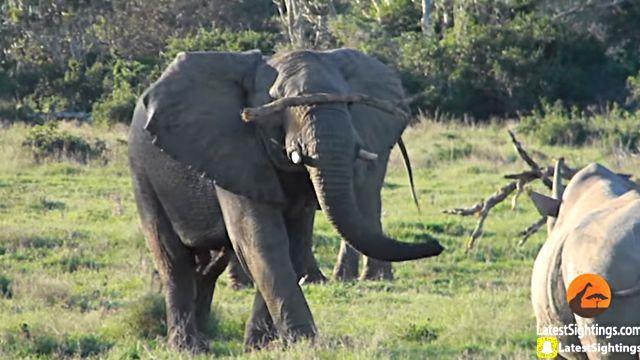 elephantnrhino0