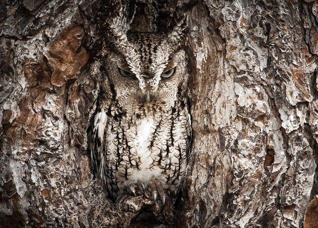 owl-photography-3__880_e