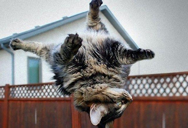 flyingcats5_e