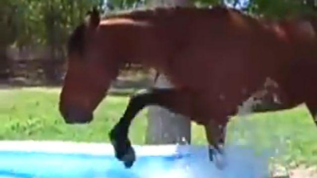 paddlinghorse2