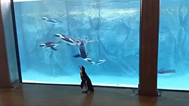 penguinwatch3