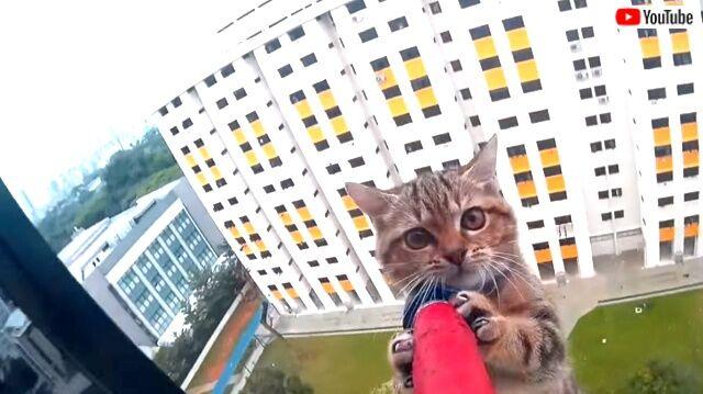 「子猫が窓の外にいる?」危機一髪!12階の窓から落ちた猫の救出劇