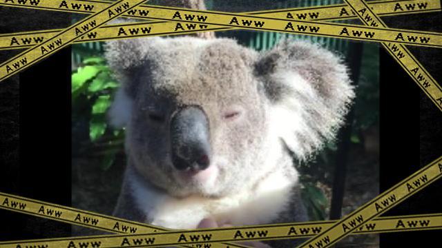 koala-f [www-frame