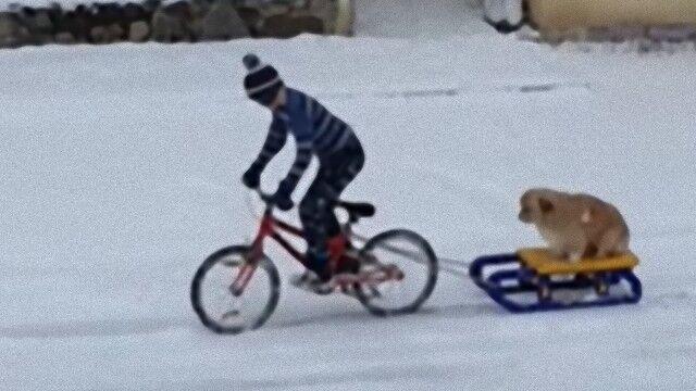 雪の日のあたたかい光景。愛犬をソリにのせ自転車を走らせる少年に地元民がサプライズ