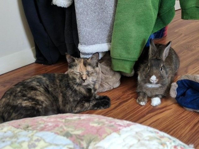 7rlse-cat-and-therapy-bunny-3_e