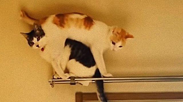 climbingcat0_e