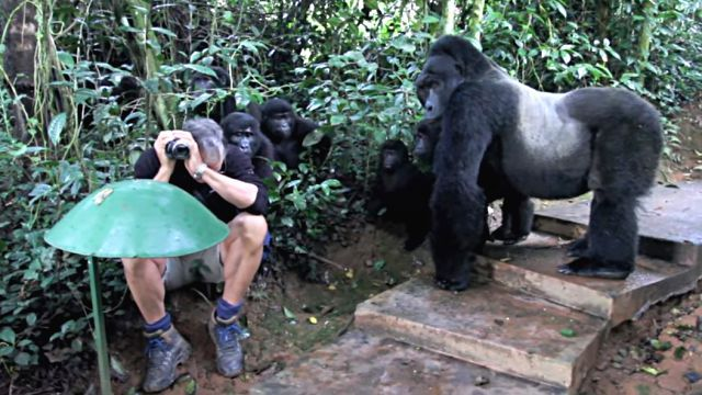 gorillafamily0