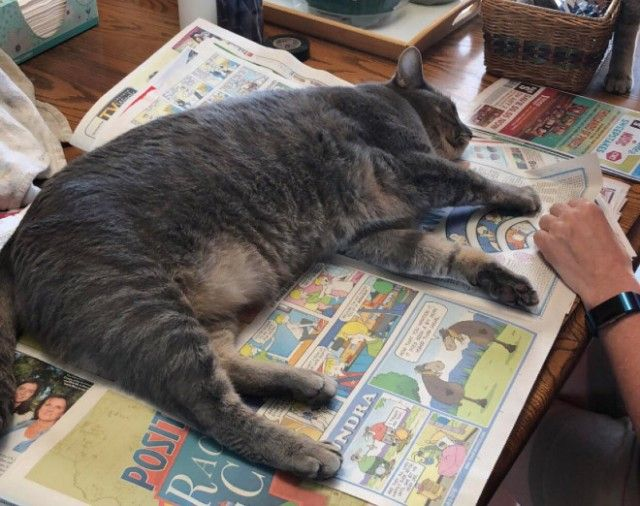 cats-vs-reading11_e