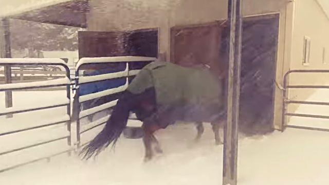 horseregret4