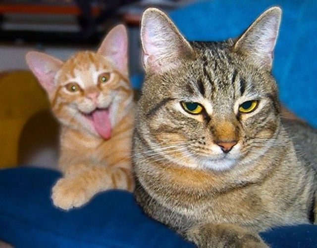 funny-cat-photobombs-104-58e38c75e0007__605_e