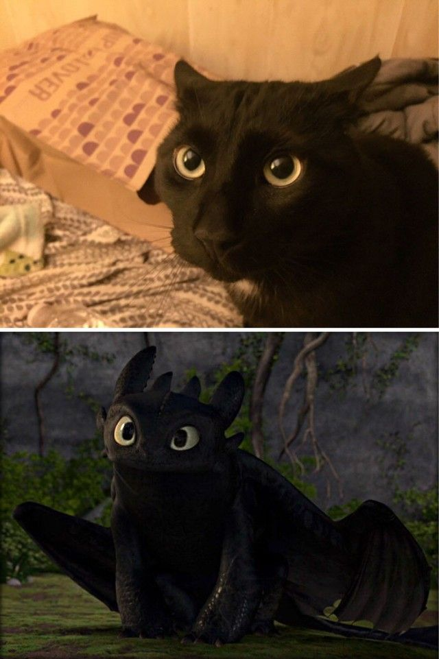 cats-toothless-lookalikes-2-57ce7b483ba6c__700_e