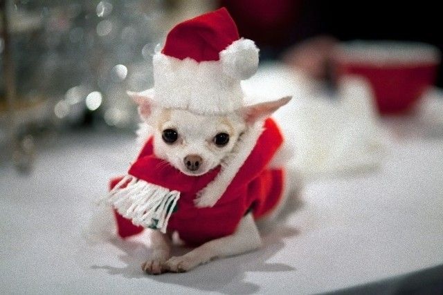 Cute-And-Small-Christmas-Animals-Fluffy-Christmas_e