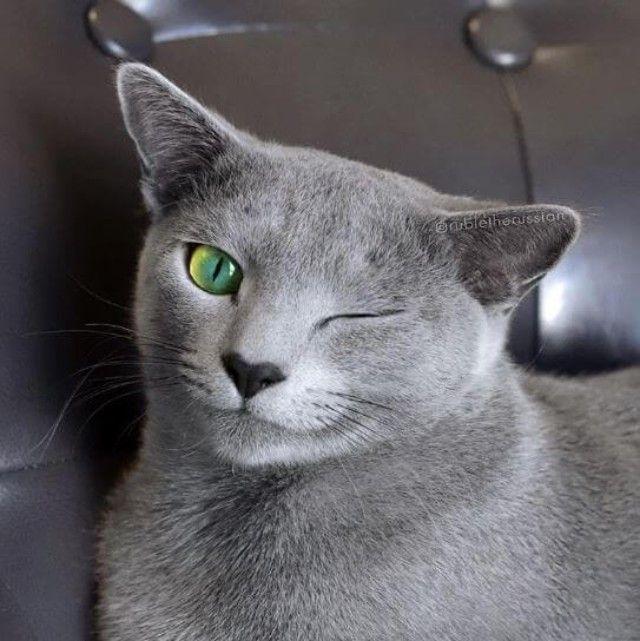 cats-4 (1)