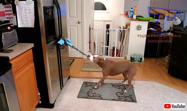 funniestdogs4_640