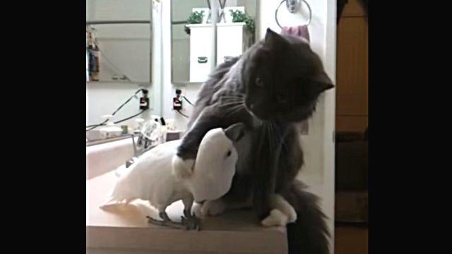 catnbird3